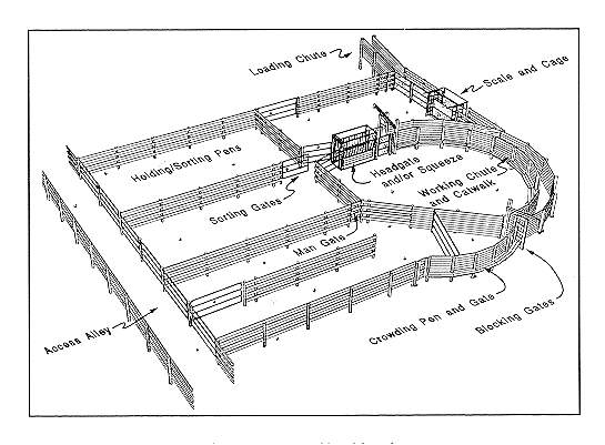 cla beef producers and cattle handling facilities. Black Bedroom Furniture Sets. Home Design Ideas